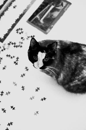 Sadie puzzle1