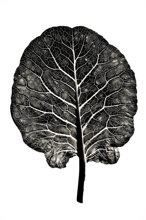 Collard leaf 2 blog