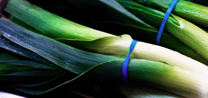 All seasons leeks
