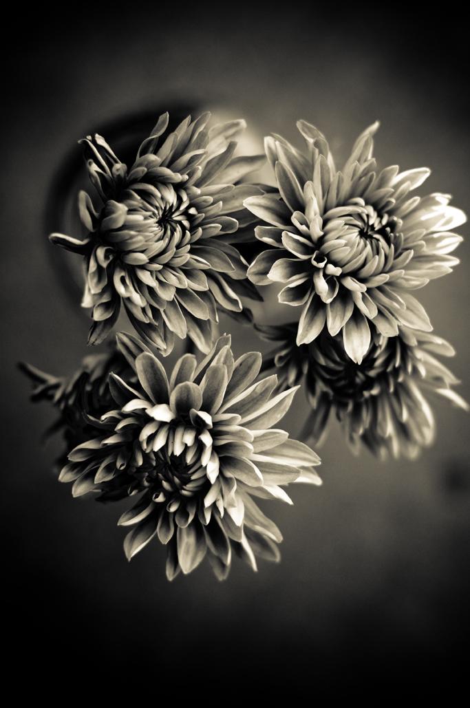 Bw flowers rick 1
