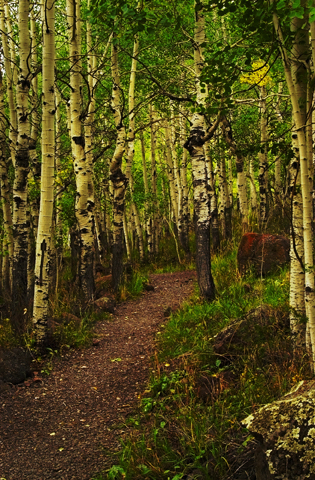 Trees vivid_blog